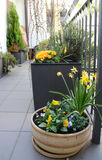 Beautiful modern terrace with mix of spring flowers Stock Photography