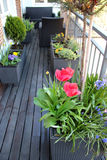 Beautiful modern terrace with mix of spring flowers Royalty Free Stock Photography
