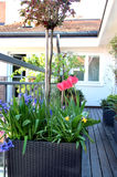 Beautiful modern terrace with mix of spring flowers Royalty Free Stock Images