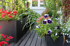 Beautiful modern terrace with mix of summer flowers Royalty Free Stock Photos