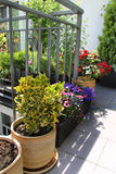 Beautiful modern terrace with mix of summer flowers Royalty Free Stock Photography