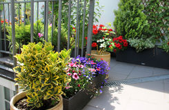 Beautiful modern terrace with mix of summer flowers Stock Photography