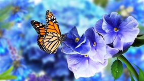 Butterfly on Flowers with Blurry Natural Background. Beautiful Butterfly Flower images