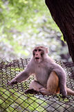 Beautiful monkey in shock or awe state Stock Photos