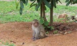 Beautiful monkey sits on the ground under the bush royalty free stock image