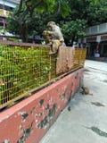 Beautiful Monkeys, Rishikesh, india stock photography