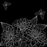 Beautiful monochrome black and white background with frame of dahlia flowers and butterflies. Royalty Free Stock Image