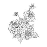 Beautiful monochrome black and white bouquet dahlia isolated on background. Royalty Free Stock Photography