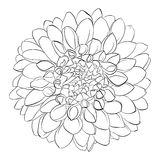 Beautiful monochrome black and white dahlia flower  Stock Images