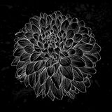 Beautiful monochrome black and white dahlia flower isolated. Hand-drawn contour lines and strokes. Royalty Free Stock Photos