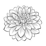 Beautiful monochrome black and white dahlia flower isolated on white background. Hand-drawn contour lines and strokes Stock Images