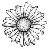 Beautiful monochrome, black and white daisy flower .