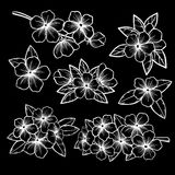 Beautiful monochrome black and white floral collection with leaves and flowers. Royalty Free Stock Photo