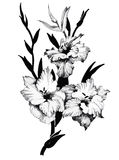 Beautiful monochrome, black and white flower isolated. Hand-drawn contour lines strokes. Royalty Free Stock Images
