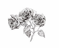 Beautiful monochrome, black and white flower isolated. Hand-drawn contour lines strokes. Royalty Free Stock Photo