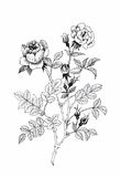 Beautiful monochrome, black and white flower isolated. Hand-drawn contour lines strokes. stock illustration