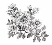 Beautiful monochrome, black and white flower isolated. Hand-drawn contour lines strokes. Royalty Free Stock Photography