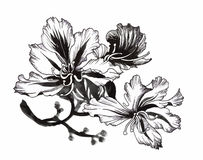 Beautiful monochrome, black and white flower isolated. Hand-drawn contour lines strokes. Stock Images