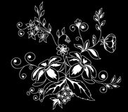 Beautiful monochrome black and white flowers and leaves isolated. Stock Image