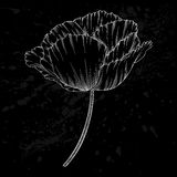 Beautiful monochrome black and white poppy isolated on background. Hand-drawn contour lines and strokes. Stock Images