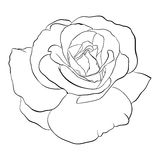 Beautiful monochrome black and white rose  Stock Images