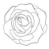 Beautiful monochrome black and white rose isolated Stock Image