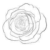 Beautiful monochrome black and white rose isolated Stock Photo
