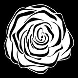 Beautiful monochrome black and white rose  isolated. Stock Photos