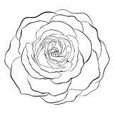 Beautiful monochrome black and white rose isolated on white background. Royalty Free Stock Images