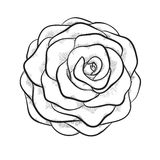 Beautiful monochrome black and white rose isolated on white background Stock Image