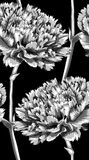 Beautiful monochrome, black and white seamless background with carnation. Stock Photo