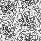 Beautiful monochrome, black and white seamless background with carnation Royalty Free Stock Photo