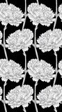Beautiful monochrome, black and white seamless background with carnation. Royalty Free Stock Photography