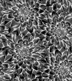Beautiful monochrome, black and white seamless background with dahlia. Royalty Free Stock Photos