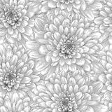 Beautiful monochrome, black and white seamless background with dahlia. Royalty Free Stock Image