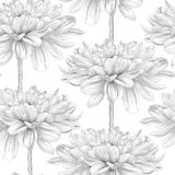 Beautiful monochrome, black and white seamless background with dahlia. Royalty Free Stock Photo