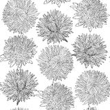 Beautiful monochrome, black and white seamless background with flowers aster. Royalty Free Stock Photos