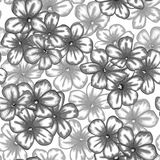 Beautiful monochrome, black and white seamless background with flowers aster. Stock Photos