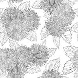 Beautiful monochrome, black and white seamless background with flowers aster. Royalty Free Stock Photography