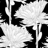 Beautiful monochrome, black and white seamless background with flowers aster. Stock Photo