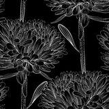 Beautiful monochrome, black and white seamless background with flowers aster. Royalty Free Stock Images