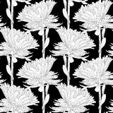 Beautiful monochrome, black and white seamless background with flowers aster. Stock Images