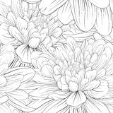 Beautiful monochrome, black and white seamless background with flowers dahlia. Stock Images