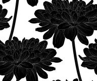 Beautiful monochrome, black and white seamless background with flowers dahlia with a stem. Stock Photo