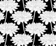 Beautiful monochrome, black and white seamless background with flowers dahlia with a stem. Stock Photography