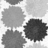 Beautiful monochrome black and white  seamless background with flowers. Stock Images