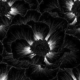 Beautiful monochrome black and white seamless background with flowers. Hand-drawn contour lines and strokes. Stock Images