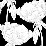 Beautiful monochrome, black and white seamless background with flowers Plant Paeonia arborea (Tree peony) with stem and leaves. Royalty Free Stock Photo