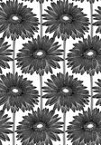 Beautiful monochrome, black and white seamless background with gerbera flower. Royalty Free Stock Photo