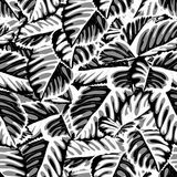 Beautiful monochrome, black and white seamless background with leaves Royalty Free Stock Photography